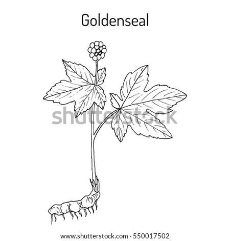 Tree Plant Ecology Symbol Vector Illustration Stock Vector