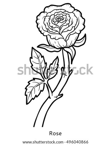 Rose Drawing Rose Stem Giant Bloom Stock Vector 31588843