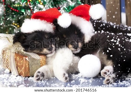 Dog Cat Christmas Tree Stock Images Royalty Free Images