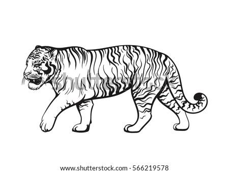 Vector Black White Walking Tiger Illustration Stock Vector
