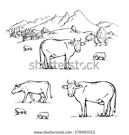 Hand Drawn Cow On White Background Stock Vector 382692346