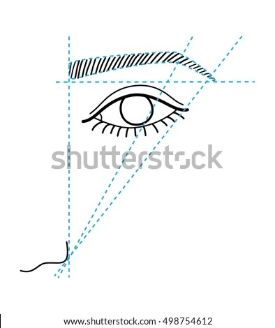 Female Perineum Anatomy Labeled Stock Illustration
