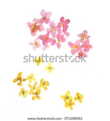 alyssum stock illustrations