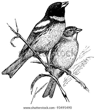 Handdrawn Spring Bird Sketch Stock Vector 71207656