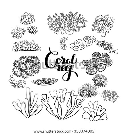 Collection Ocean Plants Coral Reef Elements Stock Vector