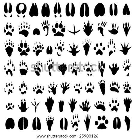 Graceful wild animal best blog: Image wild animal paw prints