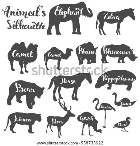 Pigs Hogs Breed Icon Set Flat Stock Vector 597777008
