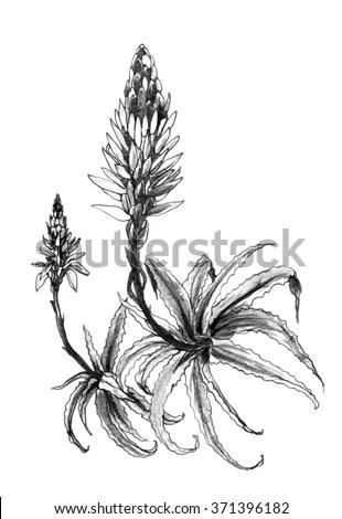Decorative Tropical Aloe Flower Plant Blossom 库存插图