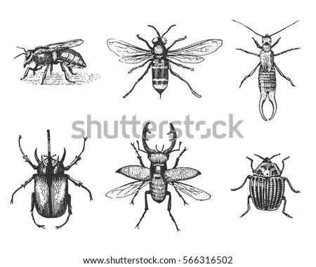 Entomological Stock Vectors, Images & Vector Art