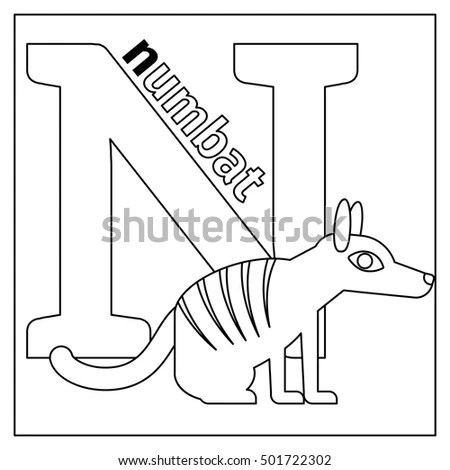 Numbat Stock Images, Royalty-Free Images & Vectors
