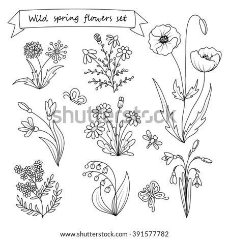 Collection Outlined Flowers Tulip Chamomile Lily Stock
