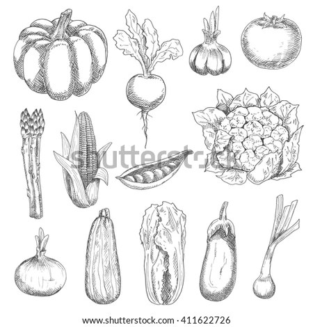 Scallion Stock Photos, Royalty-Free Images & Vectors