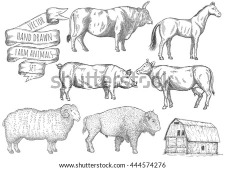 Hoofed Stock Photos, Royalty-Free Images & Vectors