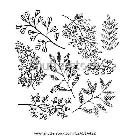 Decorative Plants Flowers Collection Hand Drawn Stock