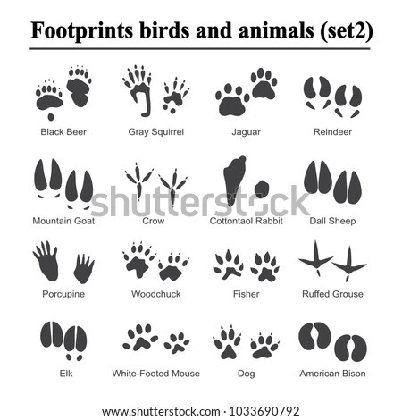 Rabbit Footprint Stock Images, Royalty-Free Images
