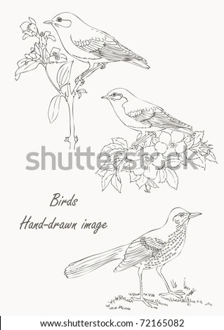 Bird Line Drawing Stock Images, Royalty-Free Images