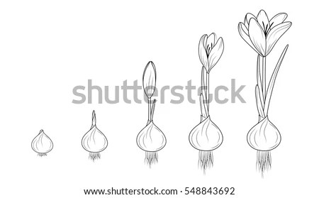 Seed Growth Stock Images, Royalty-Free Images & Vectors
