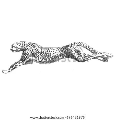 Cheetah Running Sketch Vector Graphics Black Stock Vector