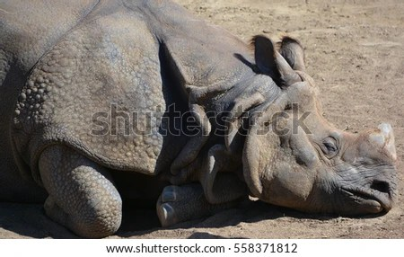 Rhinoceros Stock Photos Royalty Free Images Amp Vectors