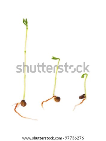 Stages Germinating Seeds Stock Photos, Images, & Pictures