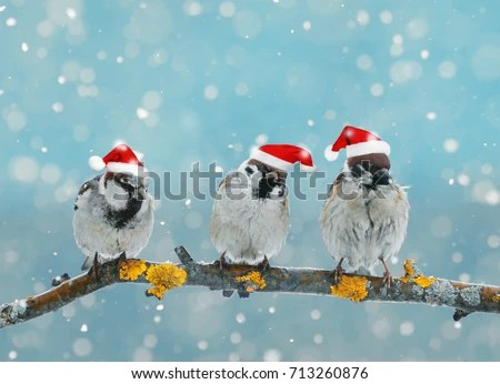 Funny Bird Stock Images Royalty Free Images Amp Vectors