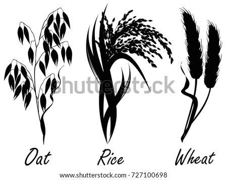 Wheat Rice Oat Set Realistic Vector Stock Vector 727100698