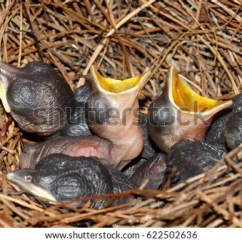 Sea Turtle Life Cycle Diagram Vauxhall Astra Mk4 Wiring Diagrams Hatchling Stock Images, Royalty-free Images & Vectors | Shutterstock