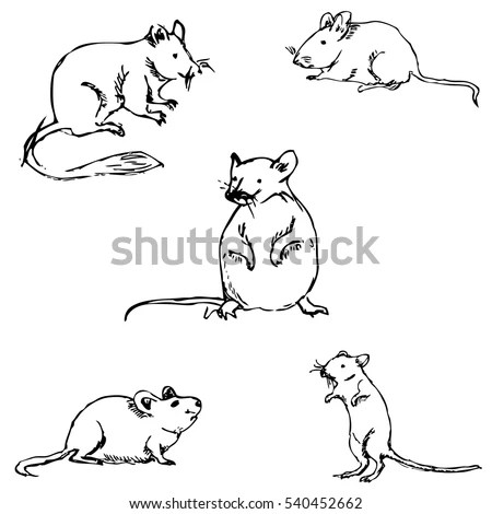 Mouse Line Stock Images, Royalty-Free Images & Vectors