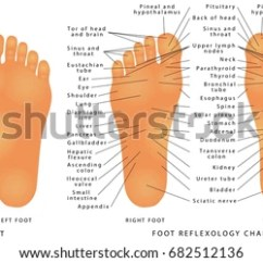 Reflexology Foot Diagram Reflex Zones Drayton Rts8 Room Thermostat Wiring Chart Stock Images, Royalty-free Images & Vectors | Shutterstock