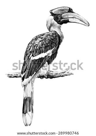 Handdraw Vector Bird Vintage Bird Illustrations Stock