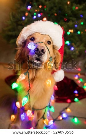 Christmas Dog Stock Images Royalty Free Images Amp Vectors