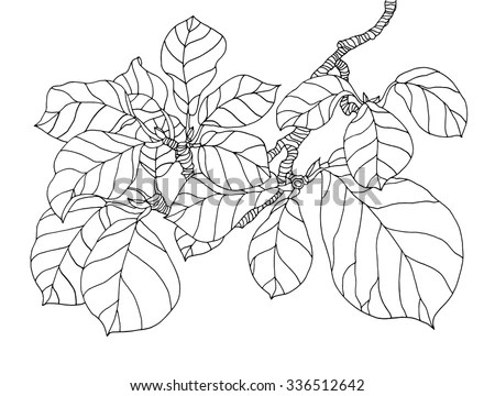 Magnolia Leaf Stock Images, Royalty-Free Images & Vectors