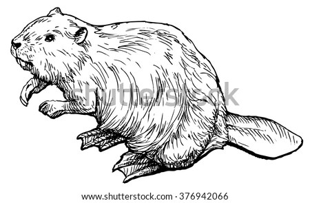 Beaver Dam Stock Images, Royalty-Free Images & Vectors