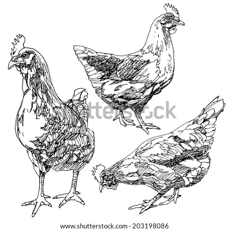 Chicken Sketch Stock Images, Royalty-Free Images & Vectors