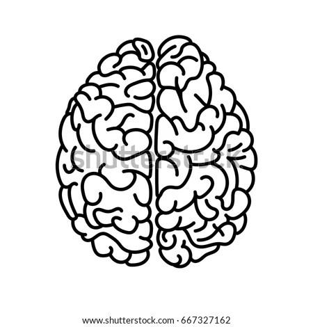 Flat Style Human Brain Top View Stock Illustration