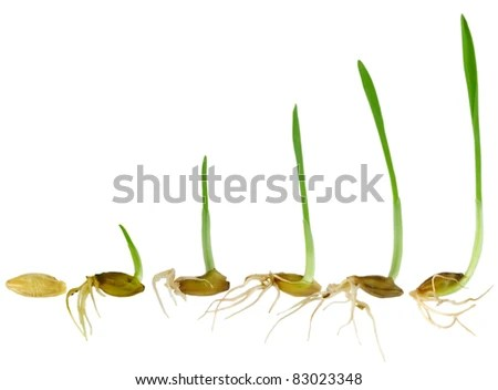 diagram of the life cycle strawberry electrical wiring a house stages growth stock photos, images, & pictures | shutterstock