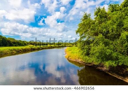 river alligators florida myakka