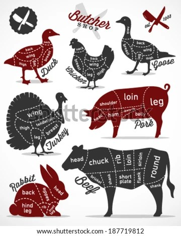 chicken muscle diagram blank cell worksheet guide for cutting meat in vintage style - stock vector