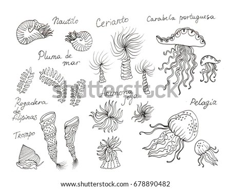 Illustration Common Pond Organisms Stock Vector 131979929