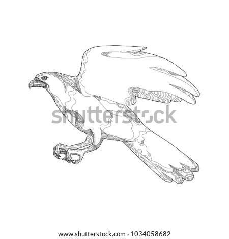 Raptor Stock Images, Royalty-Free Images & Vectors