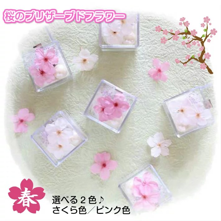 大人気!桜のプリザーブドフラワー ミニキューブさくら 選べる2色 プチギフト 桜