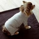 【犬 服 洋服】コットンパイルニットパジャマ