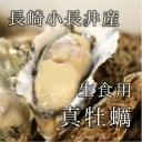 殻付き牡蠣 生食用 小長井産 中サイズ 20個 長崎 真牡蠣 豊洲直送【小長井牡蠣x20個】 冷蔵
