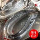 生 天然 太刀魚 タチウオ 丸一本 和歌山/九州産 他 築地直送 1-1.5kg【太刀魚1−1.5K】 冷蔵