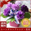 【母の日ギフト 母の日 早割 プレゼント】【楽天1位】【送料無料】青のカーネーションムーンダスト アレンジ 花束