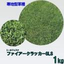 種子 トールフェスク ファイアークラッカーSLS 1kg