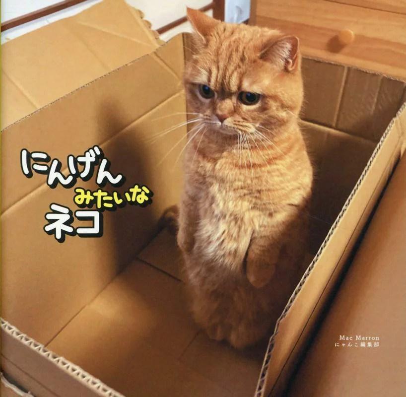 にんげんみたいなネコ
