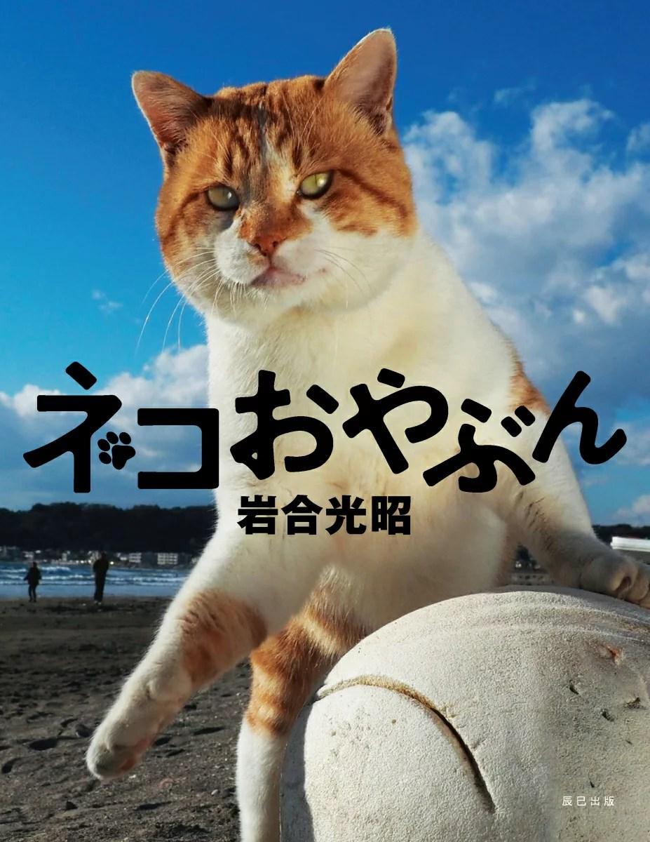 岩合光昭 写真集 「ネコおやぶん」 [ 岩合光昭 ]