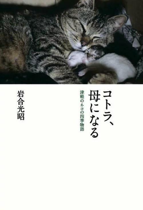 コトラ、母になる 津軽のネコの四季物語 [ 岩合 光昭 ]
