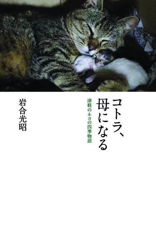 コトラ、母になる 津軽のネコの四季物語/岩合光昭【1000円